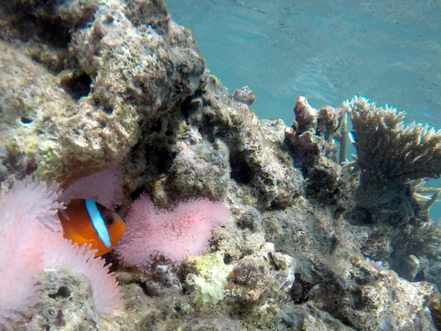 Beachcomber Island Full Day Tour Incl BBQ Resort Lunch - DISCOUNTED