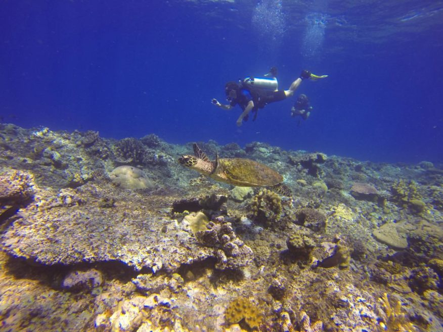 5 days, 4 nights - Special Package - PADI Open Water Diving Certification on Mana Island with all meals & transfers