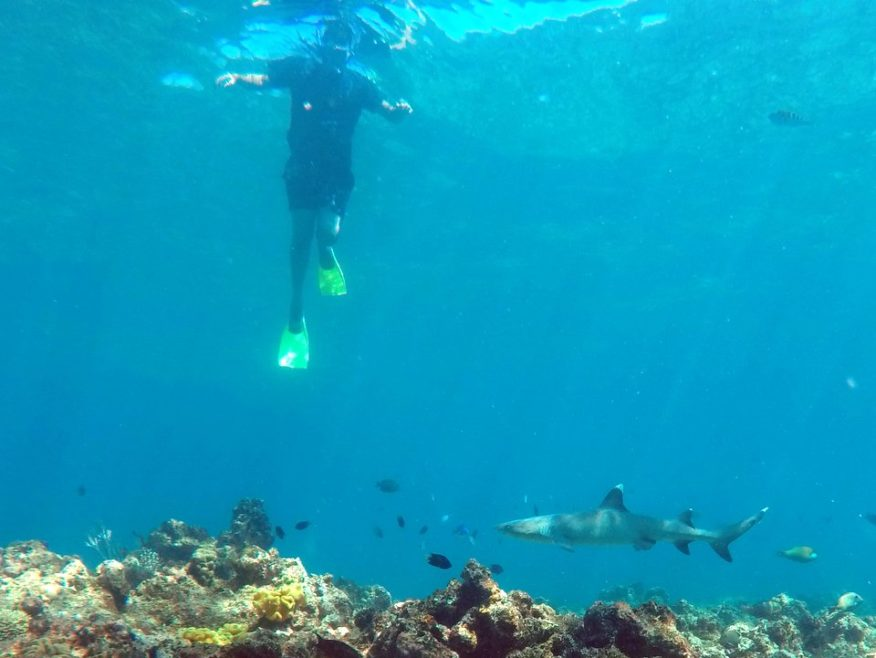 Snorkel with the Sharks at Barefoot Kuata Island Resort Day Trip - SAVE $20
